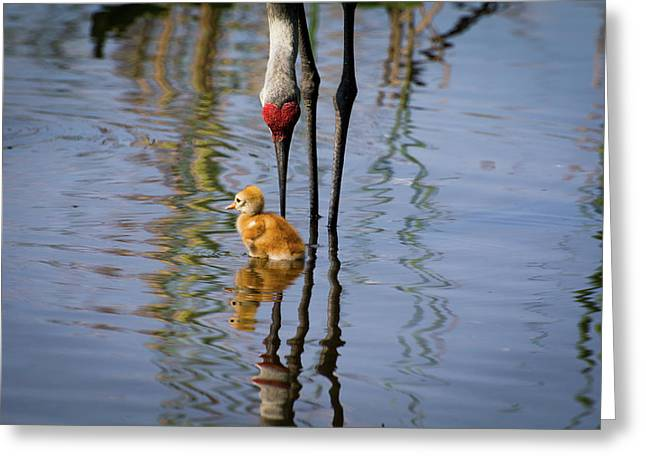 Baby Bird In The Water Greeting Card