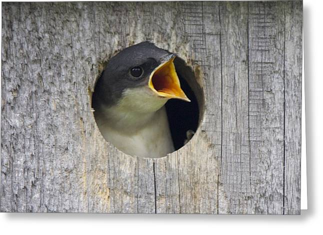 Baby Bird Greeting Card by Sue Feldberg