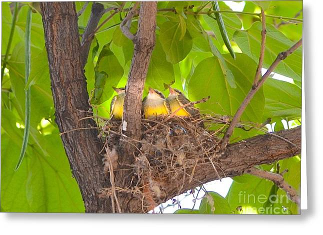 Baby Birds Waiting For Mom Greeting Card