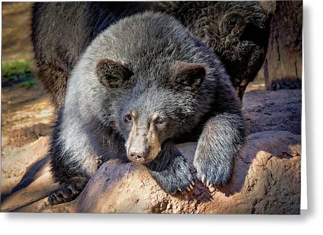 Baby Black Bear  Greeting Card by LeeAnn McLaneGoetz McLaneGoetzStudioLLCcom
