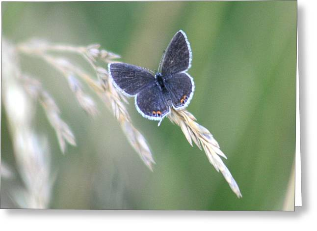 Greeting Card featuring the photograph Baby Blue by David Dunham
