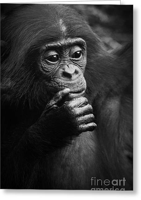 Baby Bonobo Greeting Card by Helga Koehrer-Wagner