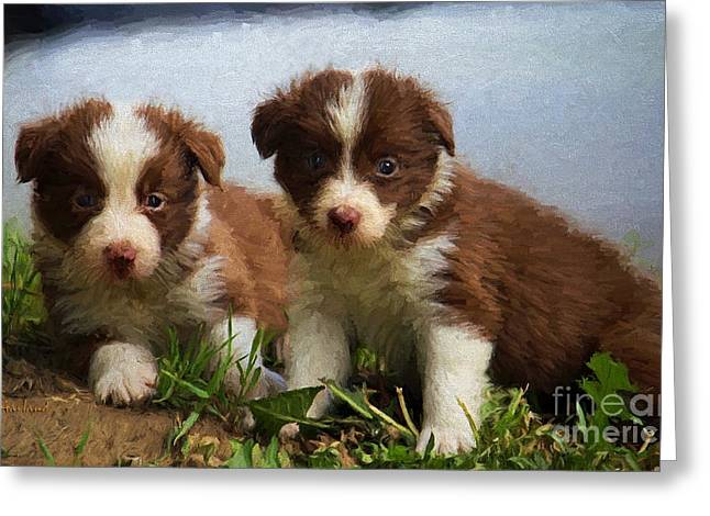 Baby Border Collies Greeting Card