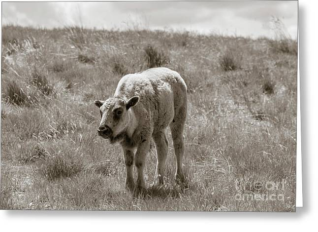 Greeting Card featuring the photograph Baby Buffalo In Field With Sky by Rebecca Margraf