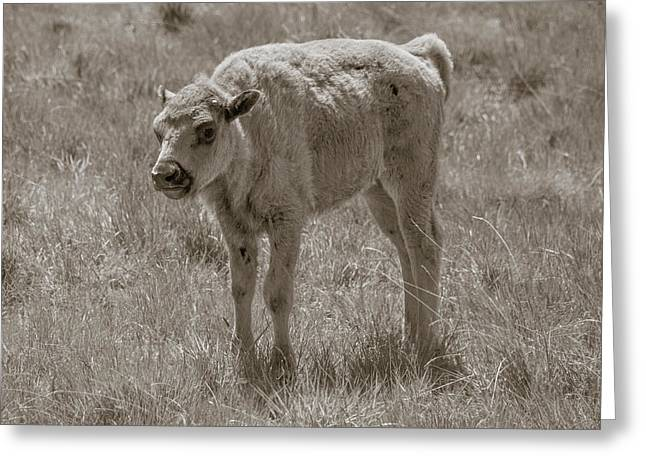 Greeting Card featuring the photograph Baby Buffalo by Rebecca Margraf