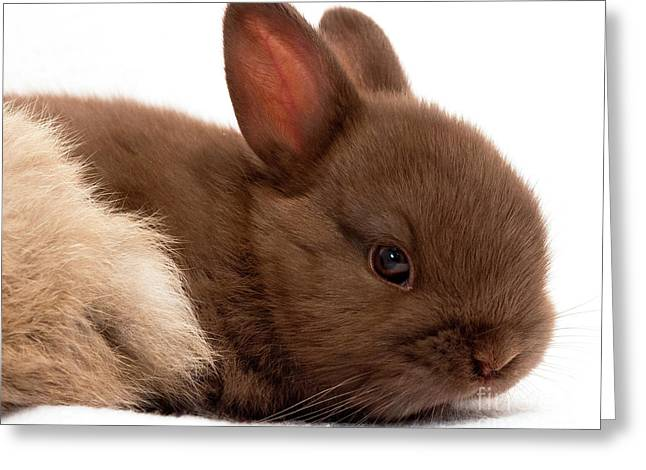 Baby Bunny  #03074 Greeting Card