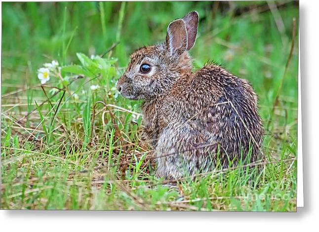 Baby Bunny Greeting Card