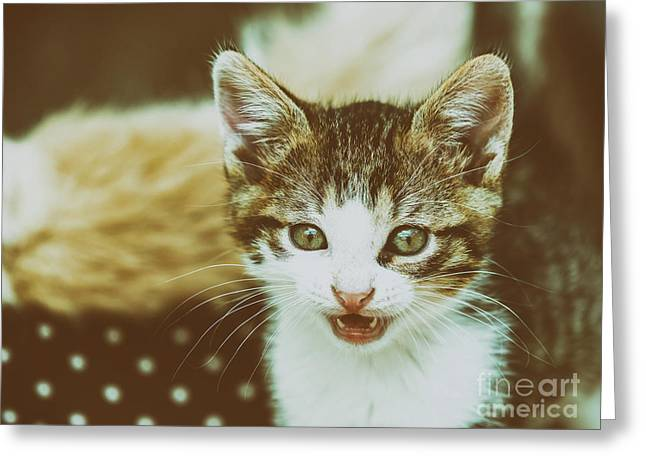 Baby Cat Meowing Greeting Card
