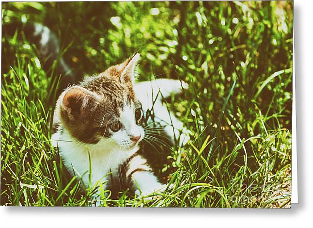Baby Cat Playing In Grass Greeting Card by Radu Bercan