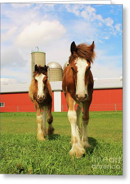 Baby Clydesdale's  Greeting Card by Anthony Djordjevic