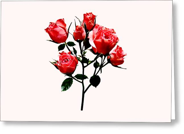 Baby Dark Pink Roses Greeting Card by Susan Savad