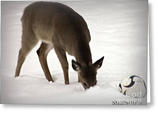 Baby Deer And Soccer Ball Greeting Card
