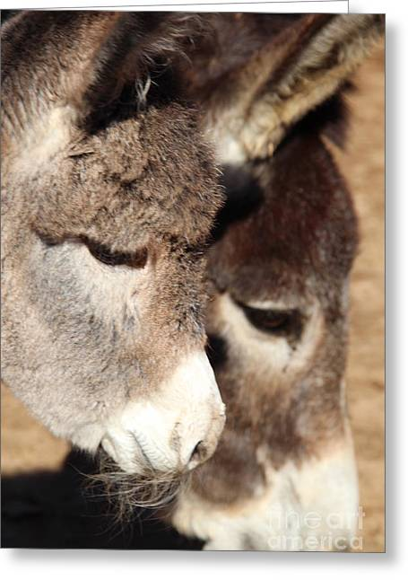 Baby Donkey Greeting Card by Pauline Ross
