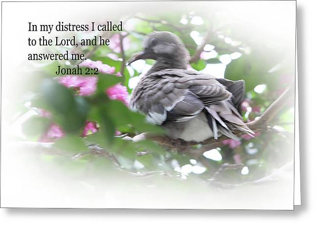 Baby Dove Jonah 2 V 2 Greeting Card by Linda Phelps