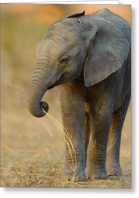 Baby Elephant Greeting Card by Happy Home Artistry