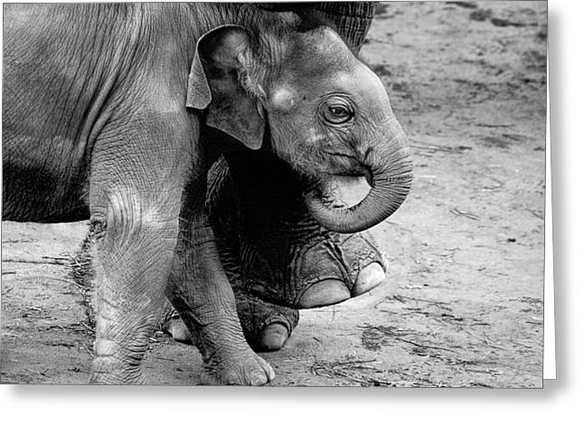 Baby Elephant Security Greeting Card