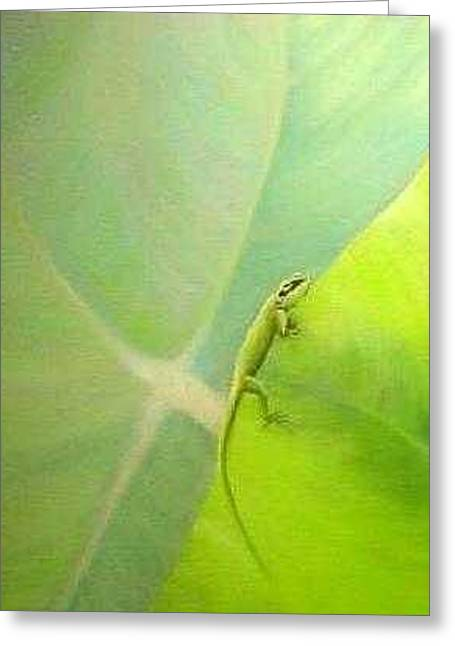 Baby Gecko Greeting Card by Jackie Dunford