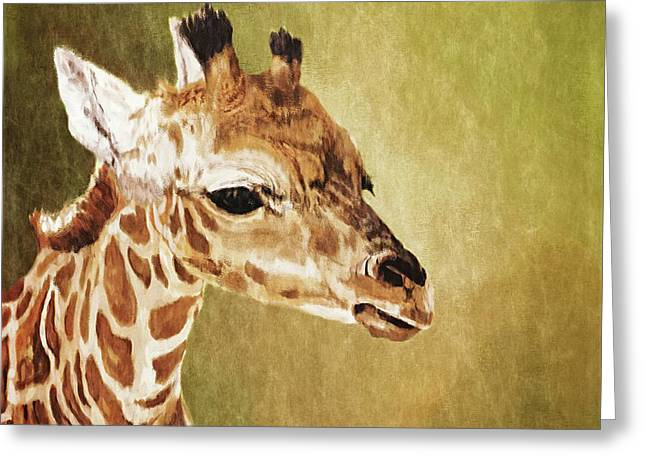 Baby Giraffe Greeting Card