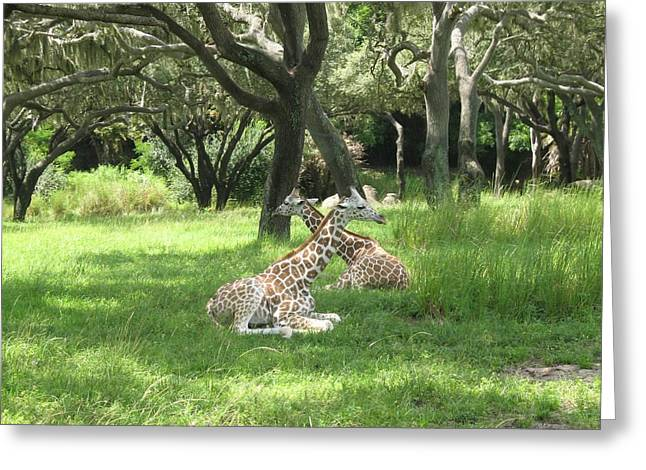 Baby Giraffes  2  Natural Greeting Card by Sharon Wright Duncan