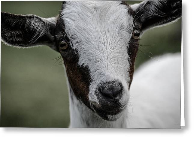 Baby Goat Greeting Card