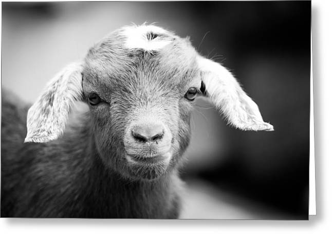 Baby Goat Horizontal Monochrome Greeting Card by Shelby Young