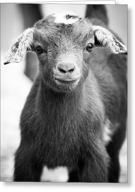 Baby Goat Monochrome Greeting Card by Shelby Young