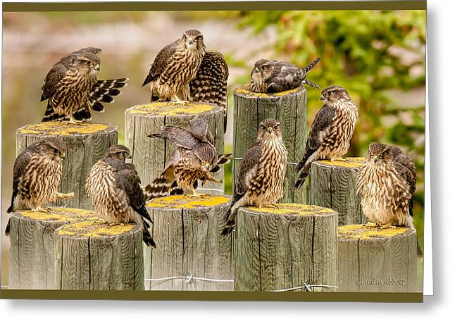 Greeting Card featuring the photograph Baby Hawk Taking Inventory  Of Its Parts by Claudia Abbott