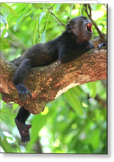 Baby Howler Monkey Greeting Card by Nathan Miller