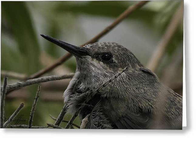Greeting Card featuring the photograph Baby Humming Bird by Lynn Geoffroy