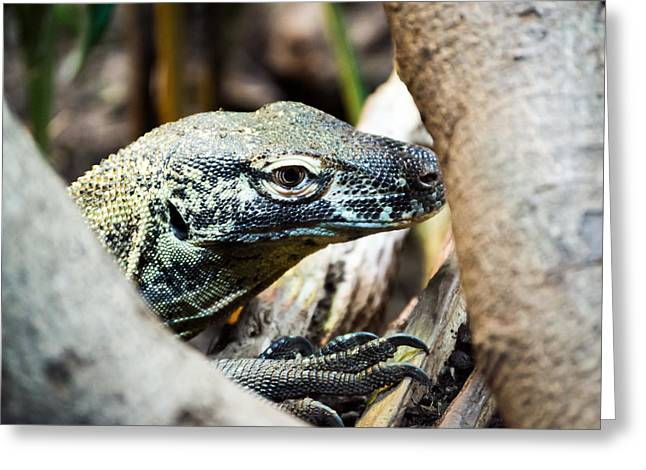 Greeting Card featuring the photograph Baby Komodo Dragon by Scott Lyons