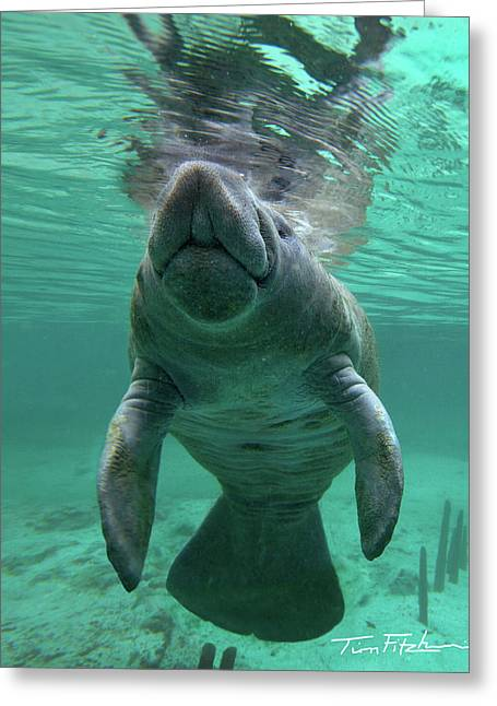 Baby Manatee Greeting Card