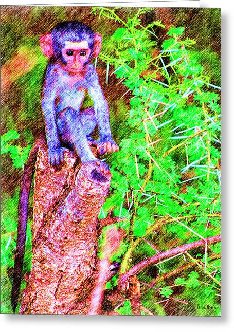 Baby Monkey On A Stump - Drawing Greeting Card