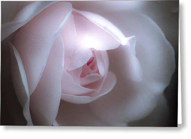 Baby Pink Rose Greeting Card by Karen Lewis