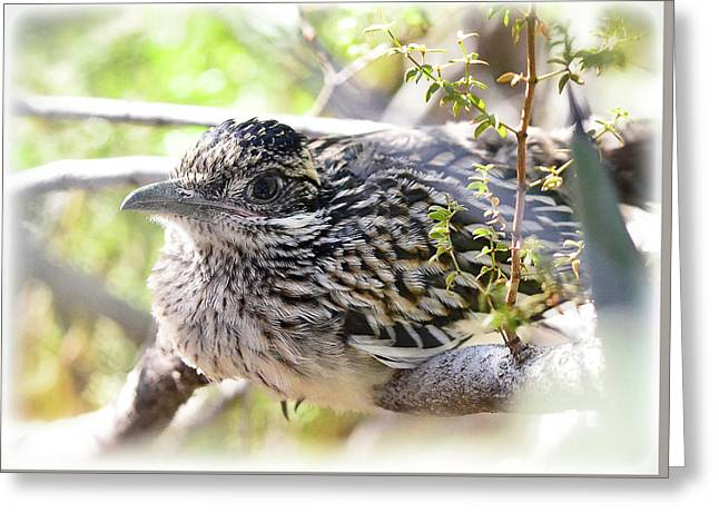 Baby Roadrunner  Greeting Card by Saija Lehtonen