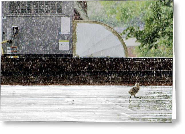 Baby Seagull Running In The Rain Greeting Card
