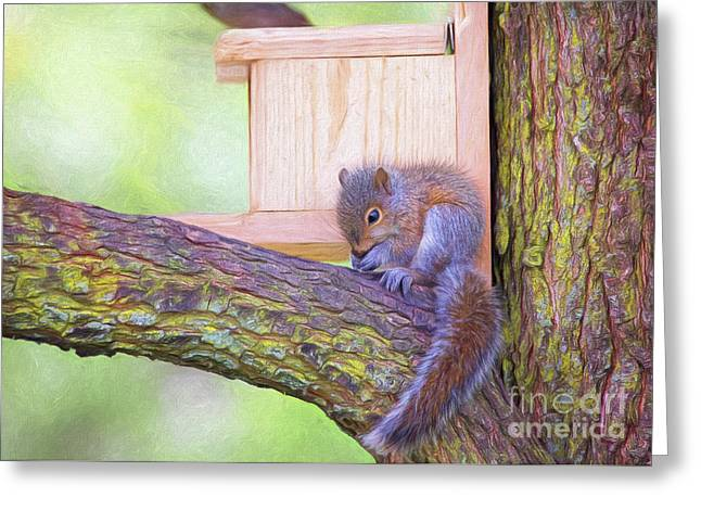Baby Squirrel In The Tree Greeting Card