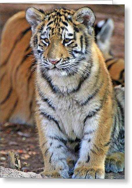 Baby Stripes Greeting Card by Scott Mahon