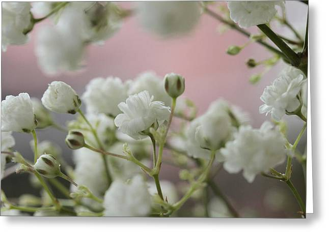 Baby's Breath Greeting Card by Connie Handscomb