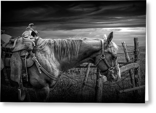 Back At The Ranch In Black And White Greeting Card by Randall Nyhof