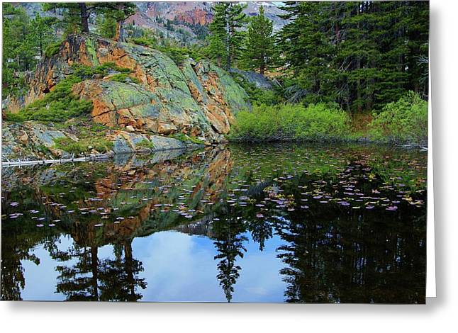 Back Country Lily Pond Greeting Card by Sean Sarsfield