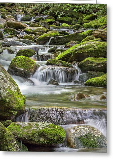 Back Country Stream Greeting Card