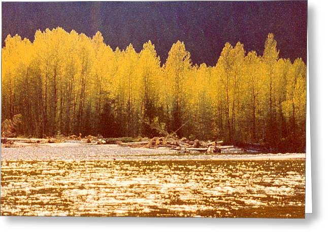 Back Lit Trees By The River Ae 2  Greeting Card by Lyle Crump
