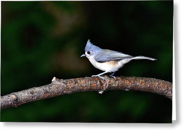 Back Yard Bird Greeting Card