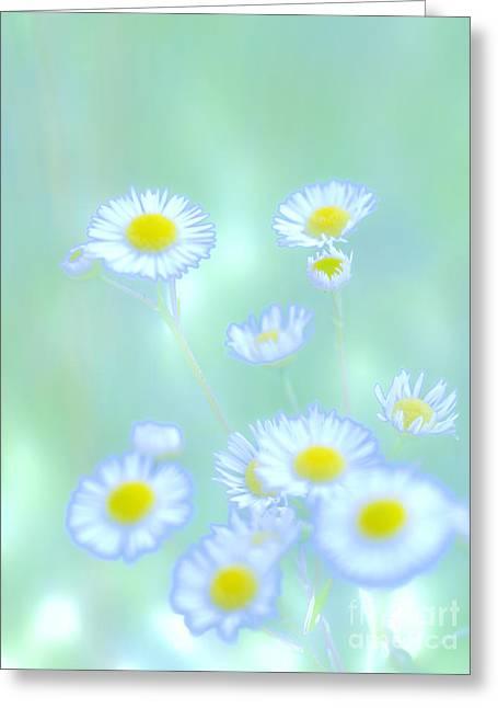 Background Flowers Greeting Card by Tara Lynn