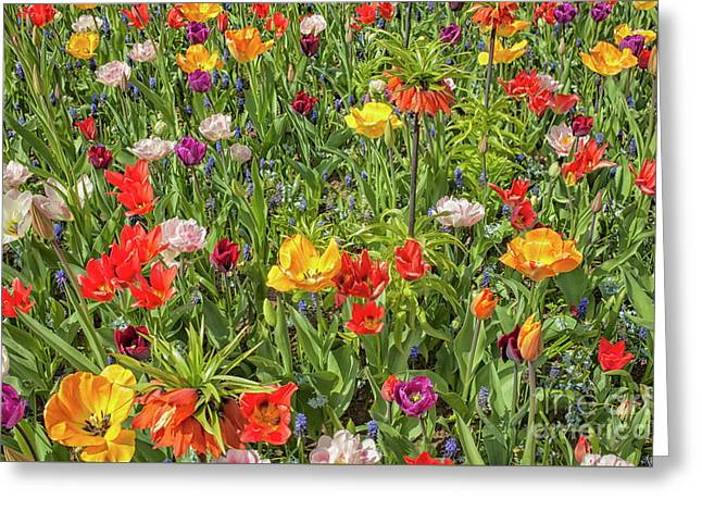 Background Of Colorful Flowers Greeting Card