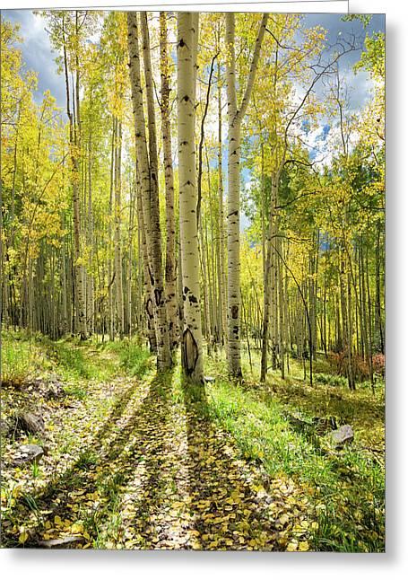 Backlit Aspen Trail Greeting Card