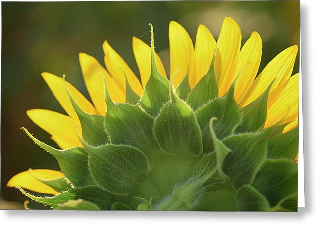 Backlit Beauty Greeting Card