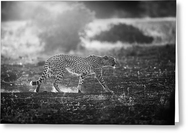 Backlit Cheetah Greeting Card