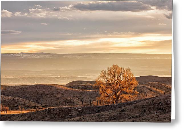 Backlit Cottonwood Greeting Card