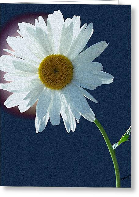 Backlit Daisy Greeting Card